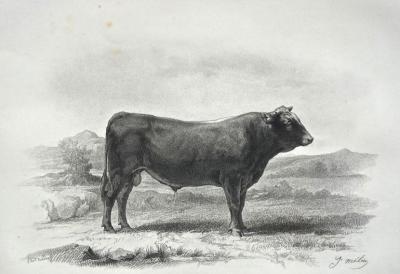 BAUDRAN Auguste