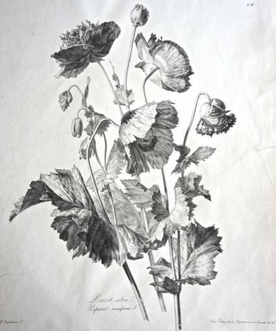 ENGELMANN Godefroy (printer-lithograph)